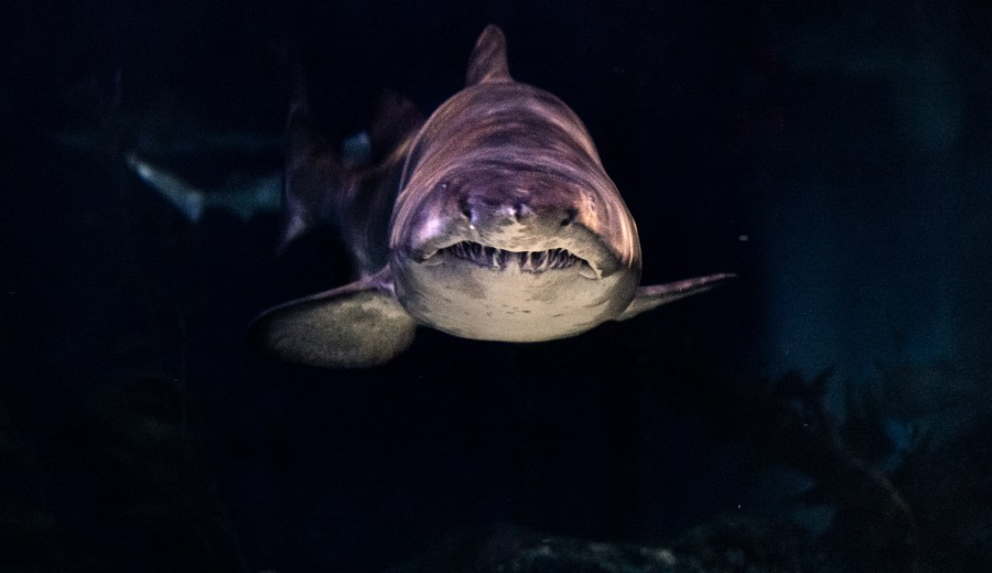 Scary Shark in pitch black waters - Photo by Wai Siew on Unsplash